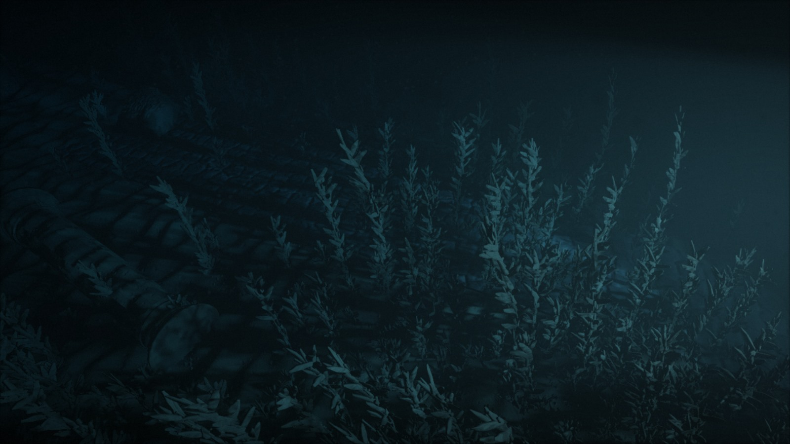 Underwater vegetation